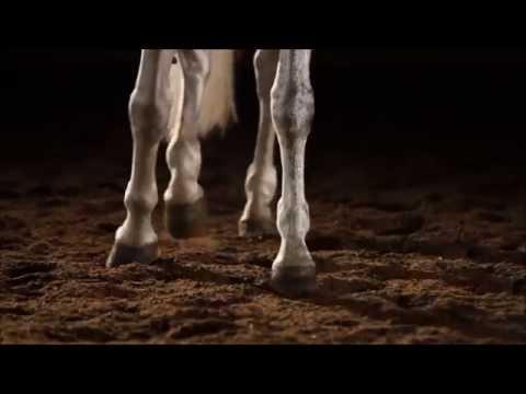 Beautiful Horse Tribute