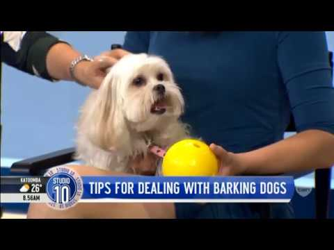 how-to-help-stop-dogs-barking-excessively