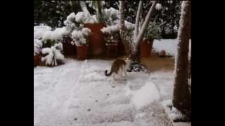 fodspor i sneen.........wmv