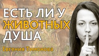 """Евгения Тимонова: """"Есть ли у животных душа?"""""""