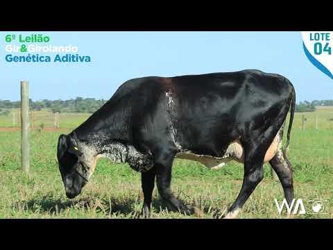 LOTE 04 - 6352 BD - 6º Leilão Gir & Girolando Genética Aditiva