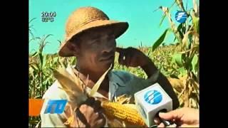 Concepción: Asisten a producción campesina en el distrito de Arroyito - 04/02/2015