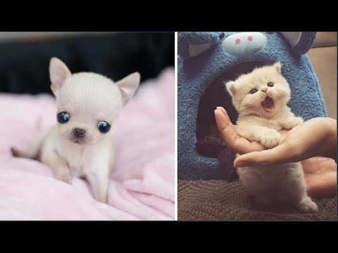 AWW CUTE BABY ANIMALS Videos Compilation cutest moment of the animals  Soo Cute! #31