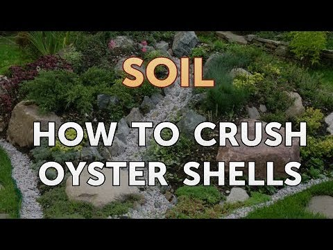 How to Crush Oyster Shells