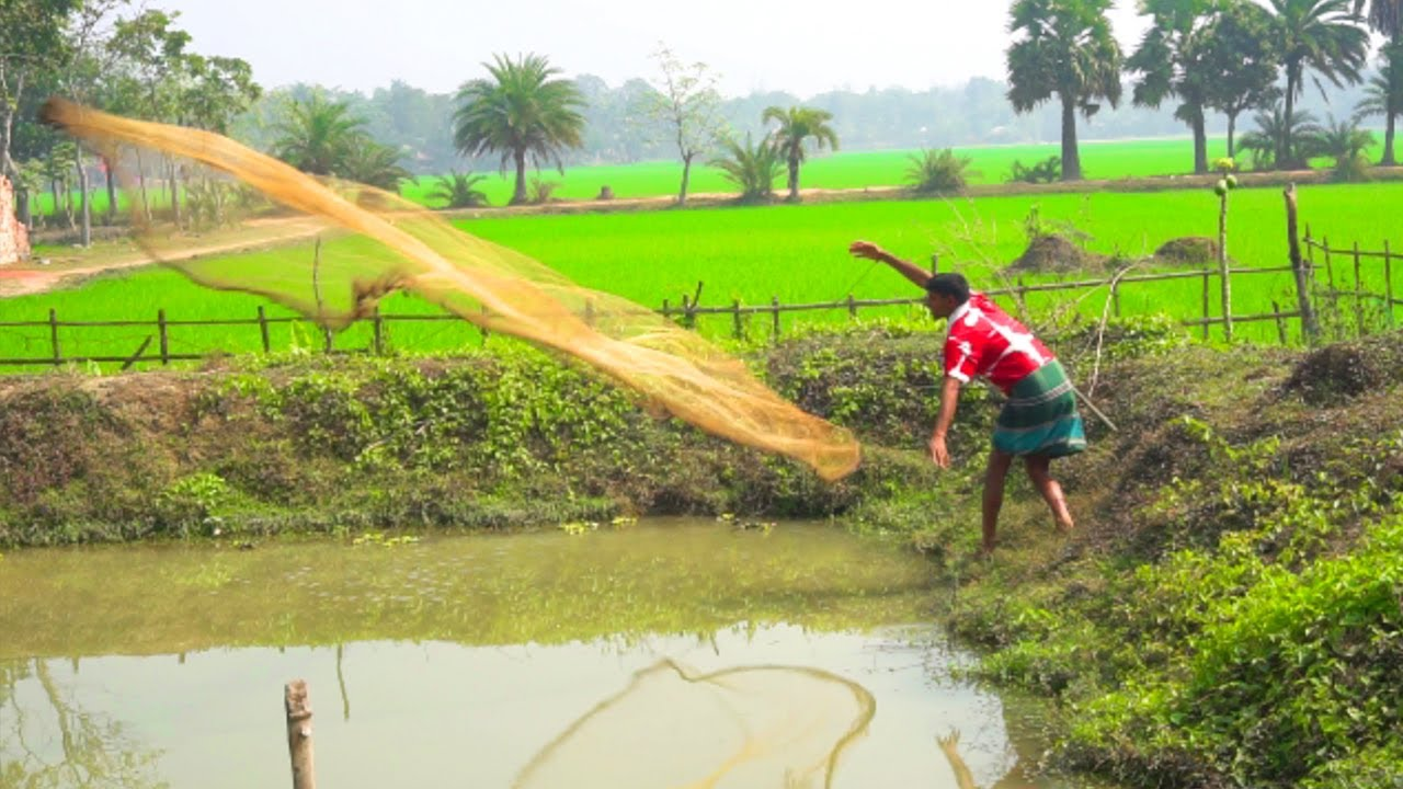 Download Net Fishing | Traditional net fishing in village rpond | Fishing in Village by ABTVbd