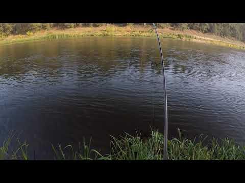 Neris 2018-10-10 Salmon 116 cm