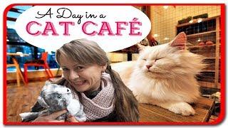 Fetita si cristalul #67 Ioana la CAT CAFE  Prima zi in Budapesta.