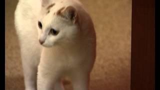 Юрий Куклачев. Может ли домашний кот стать артистом?