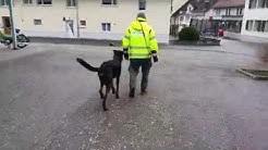 Private Hundeschule Urs Baschung