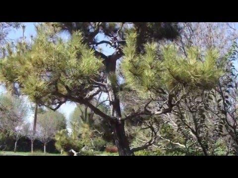 Visit to the Japanese Friendship Garden in San Jose CA