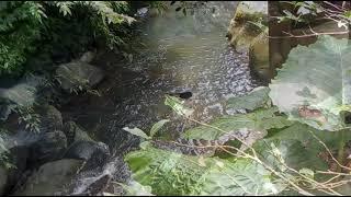 台灣 陽明山 絹絲谷  Silk village spa resort Yang Ming Shan Taiwan