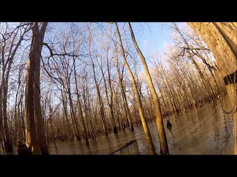 2013 Arkansas Green Timber Duck Hunting!! Running the Hole & Mallards in your Face!!
