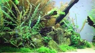 The Manten Forest Aquarium @aquaeden-shop.net (day 57)