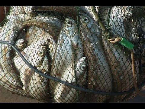 5 чудо-рыбалок ЧЕХОНИ