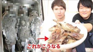 これは食用の鳩です PDS https://www.youtube.com/user/PDSKabushikiGai...