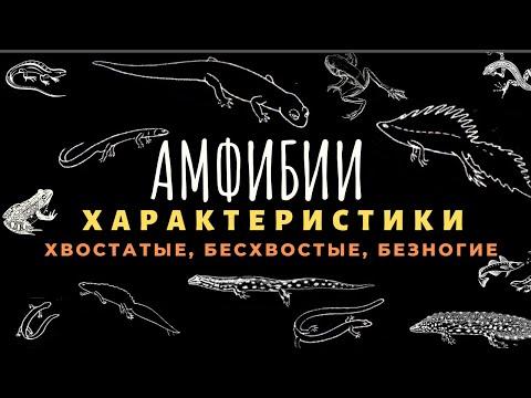 Класс земноводные или амфибии. Строение, Отличия Биология для детей 7 класс ЕГЭ Земноводные животные