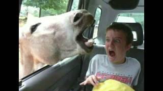 Дети и животные. Приколы с детьми