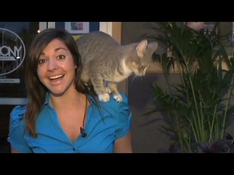 Thumbnail for Cat Video Cat climbs reporter on air