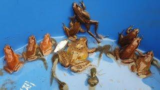작은 웅덩이에서 개구리8마리 붕어 미꾸라지 새우 팥붕어…