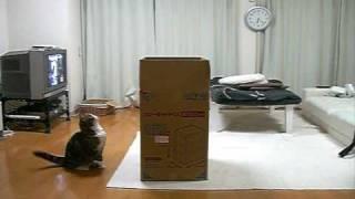 大きな箱とねこ。