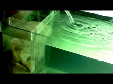 internal onside sump filter for marine and fresh water aquarium
