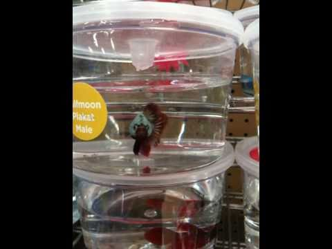 4k petco pet store walk through animals and pets rep for Betta fish tanks petco
