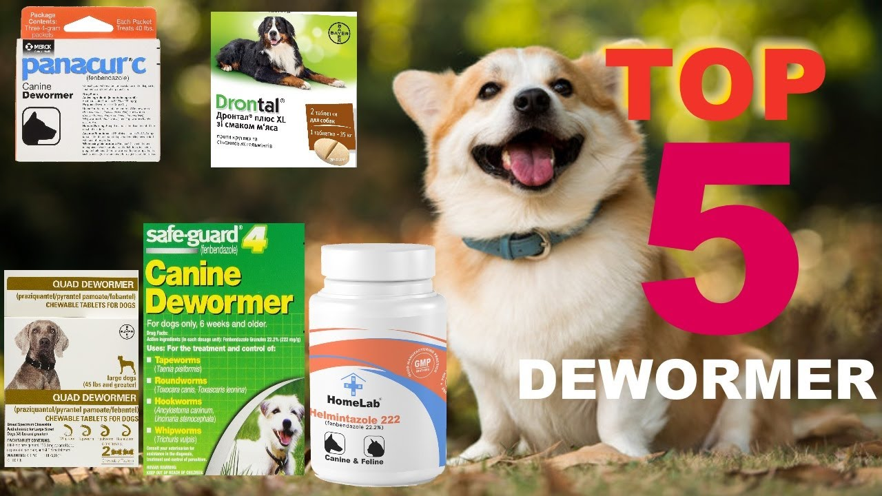 Top BEST 5 Dogs Wormers Products / Panacur / Fenbendazole / Helmintazole / Safe Guard / 펜 벤다 졸