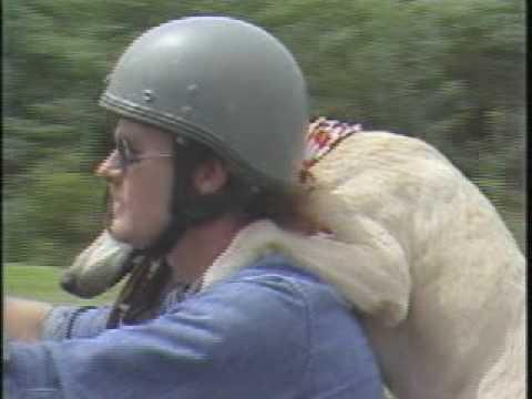 Carolina Camera: The Original Motorcycle Dog