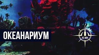 #8 Океанариум(, 2014-12-19T18:13:11.000Z)