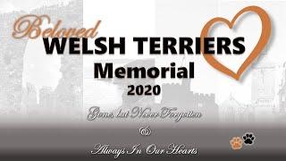 2020 Welsh Terrier Memorial