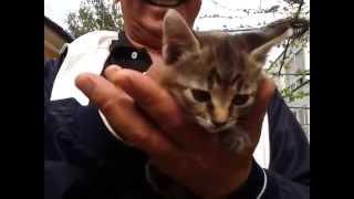 Котик  с буквой на лбу