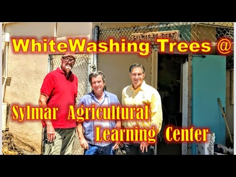 Organic WHITEWASH for HEALTHIER Trunk, Branches & Leaves @ SYLMAR AGRICULTURAL LEARNING CENTER