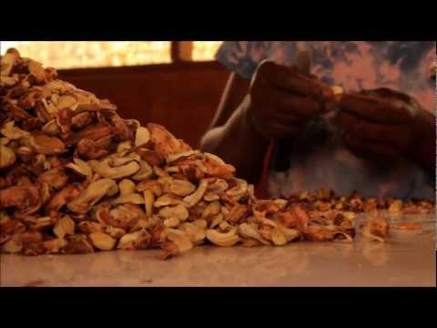 Cashew Nut And Fruit Processing