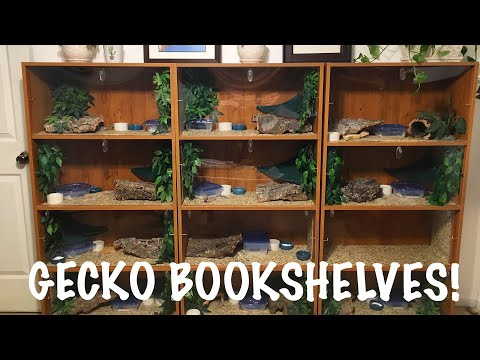 Gecko Bookshelf | DIY Leopard Gecko Enclosure