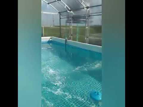 бассейн Intex + навес