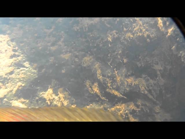 Australoheros ykeregua
