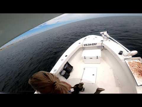 Bluefin Tuna In Shallow Water Off Plum Island