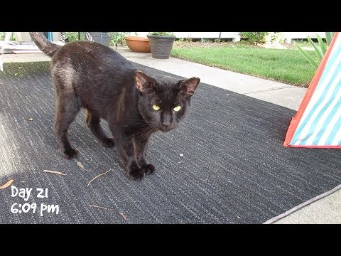 Boo Days 20 to 22 - While I Was Away - Training And Socializing A Feral Cat