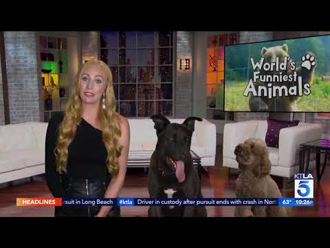 "We chat with host of the CW's ""World's Funniest Animals"" Elizabeth Stanton"