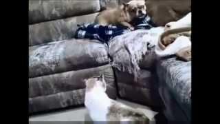 Кошки против собак 2;2