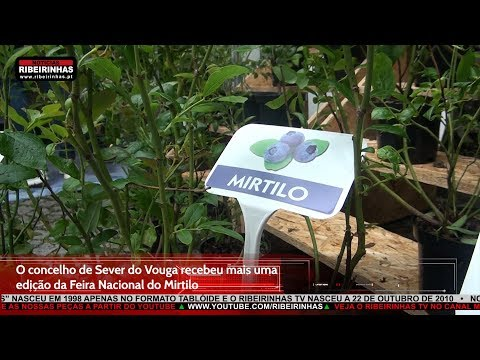 O Parque Urbano da Vila de Sever do Vouga voltou a acolher a Feira Nacional do Mirtilo