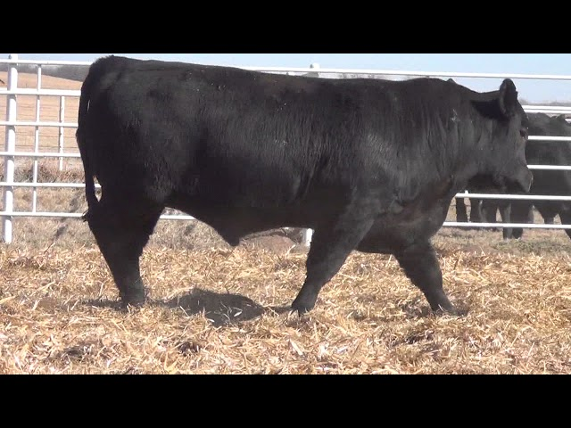 Express Ranches Lot 98