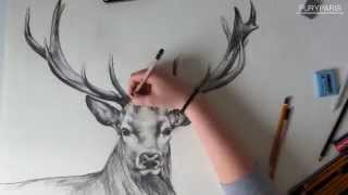 Fast drawing deer / Szybki rysunek jelenia