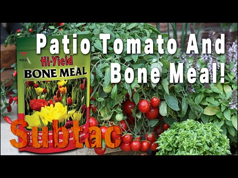 Patio Tomato And Bone Meal | Gardening