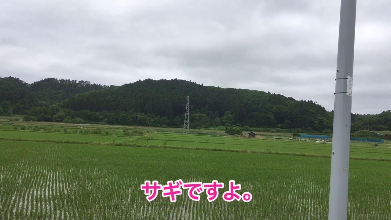 秋田犬専門チャンネル 秋田犬専門犬舎竜華苑 ホウカの赤ちゃん目がパチリ