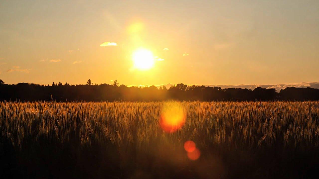 Wheatfield Sunset - YouTube