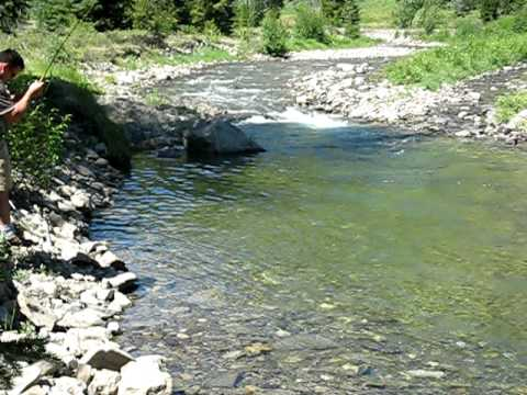 southern alberta fly fishing for cutthroat trout
