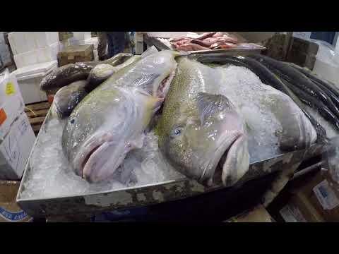 Chef Bill Telepan & Fishcoin Team Members Visit Fulton Fish Market