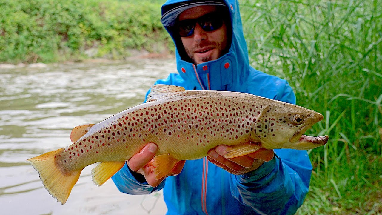 SPINNING alla TROTA in TORRENTE - River Trout Fishing