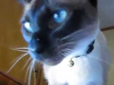 cat with a non two- (cute)-القط مع غير اثنين (لطيف)